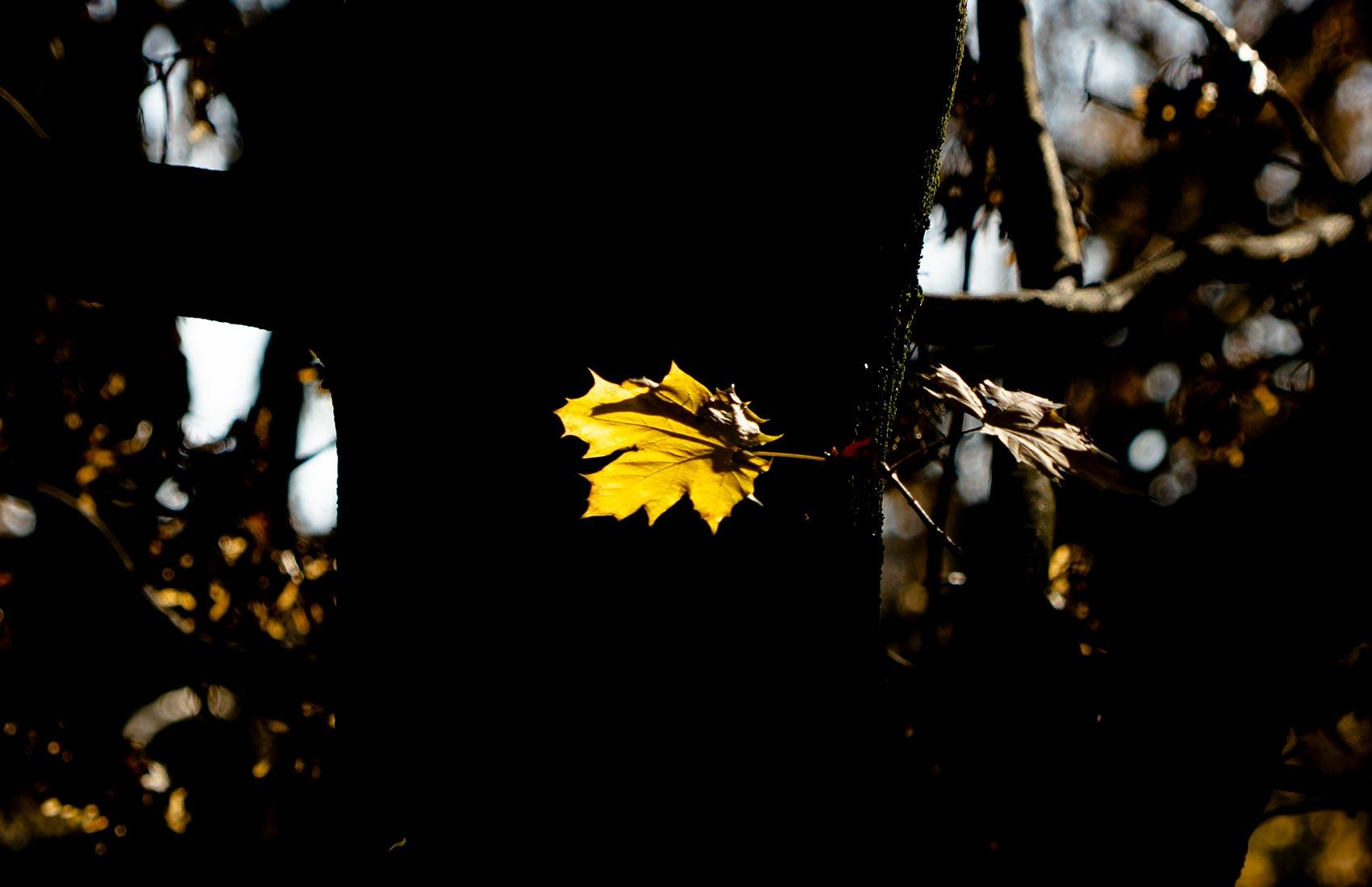 Joyside autunno luci solitarie colori immagini