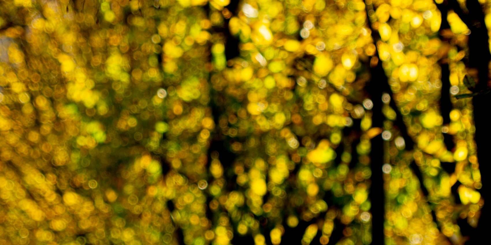 Joyside autunno colori luci all'ora di punta immagini