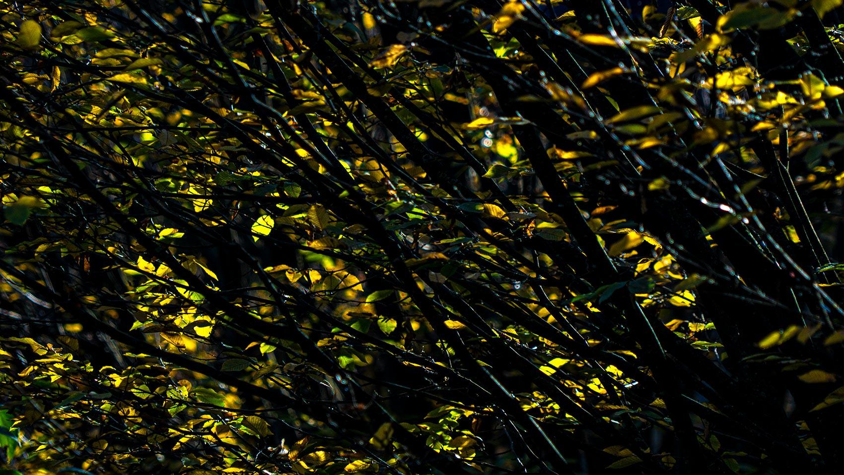 Joyside autunno immagini colori