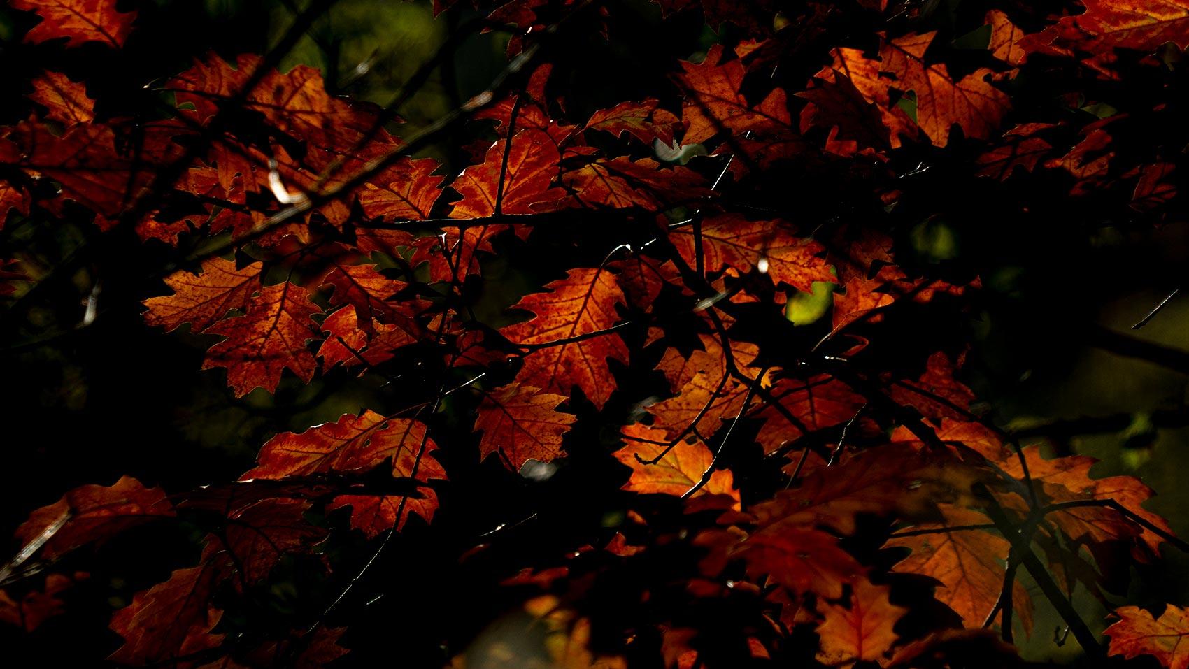 Joyside autunno colori immagini