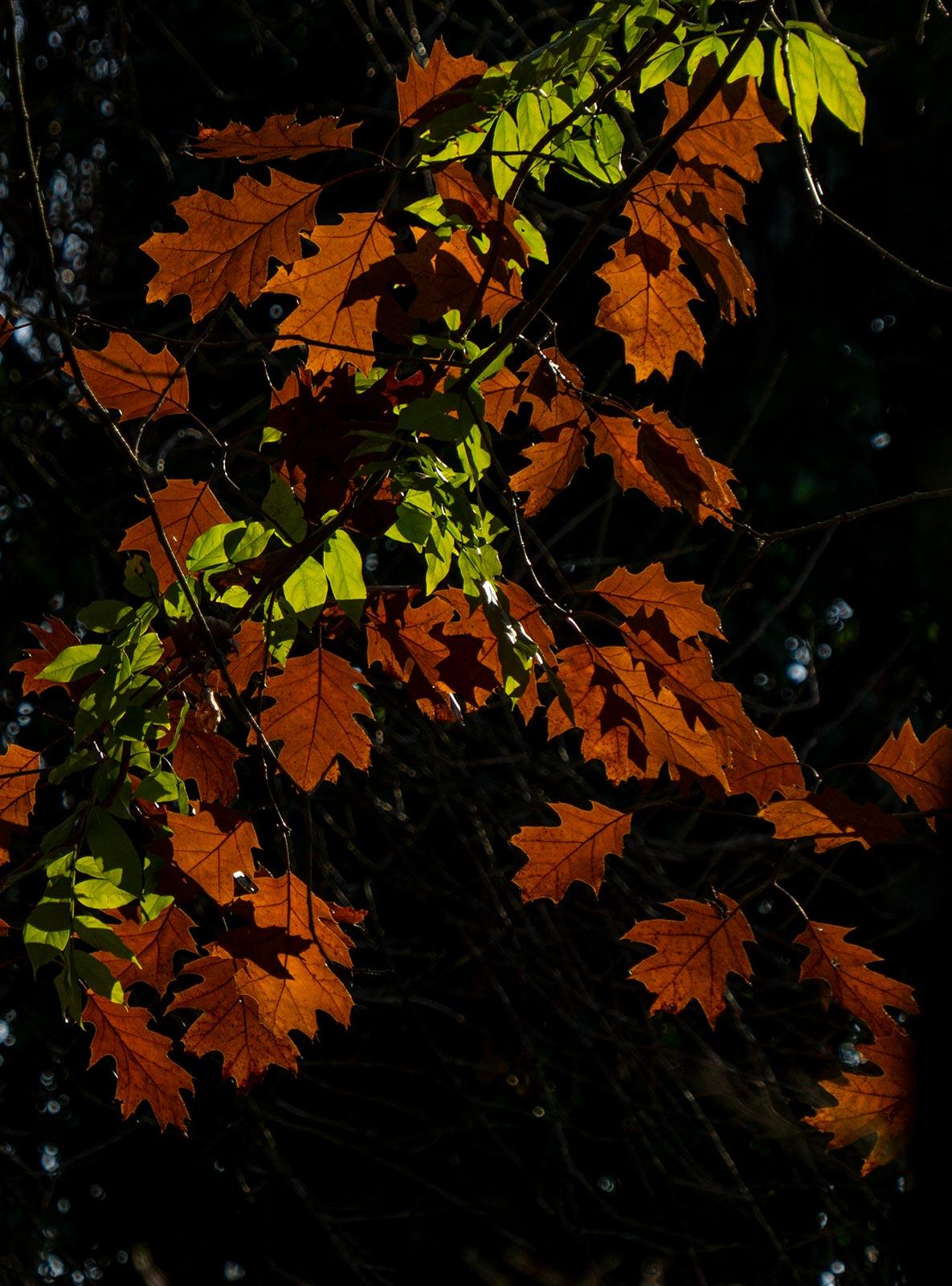 Joyside autunno immagini colori foglie migranti